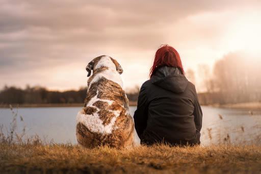 Calm image looking at the back view of a woman sitting with a dog sitting next to her, overlooking a lake and surrounding trees and natural grasses.