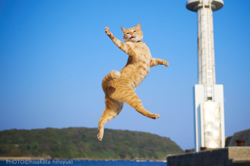 Cat shown in a twist at mid-air of high jump.