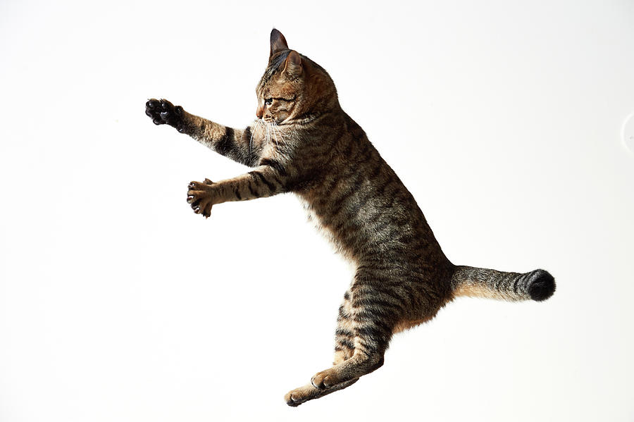Cat in mid-air descending from big leap.