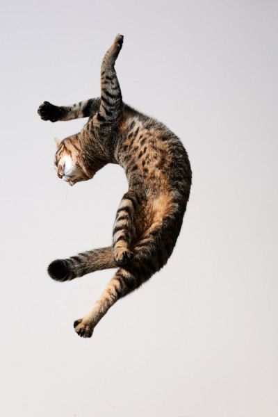 Cat in a contorted twist while leaping large distance.
