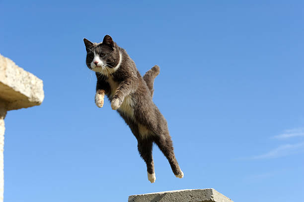 Cat leaping between two high points.