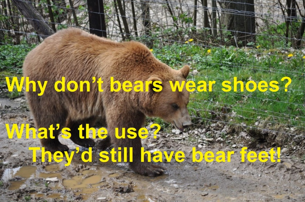 Photo with joke about Bears wearing shoes.