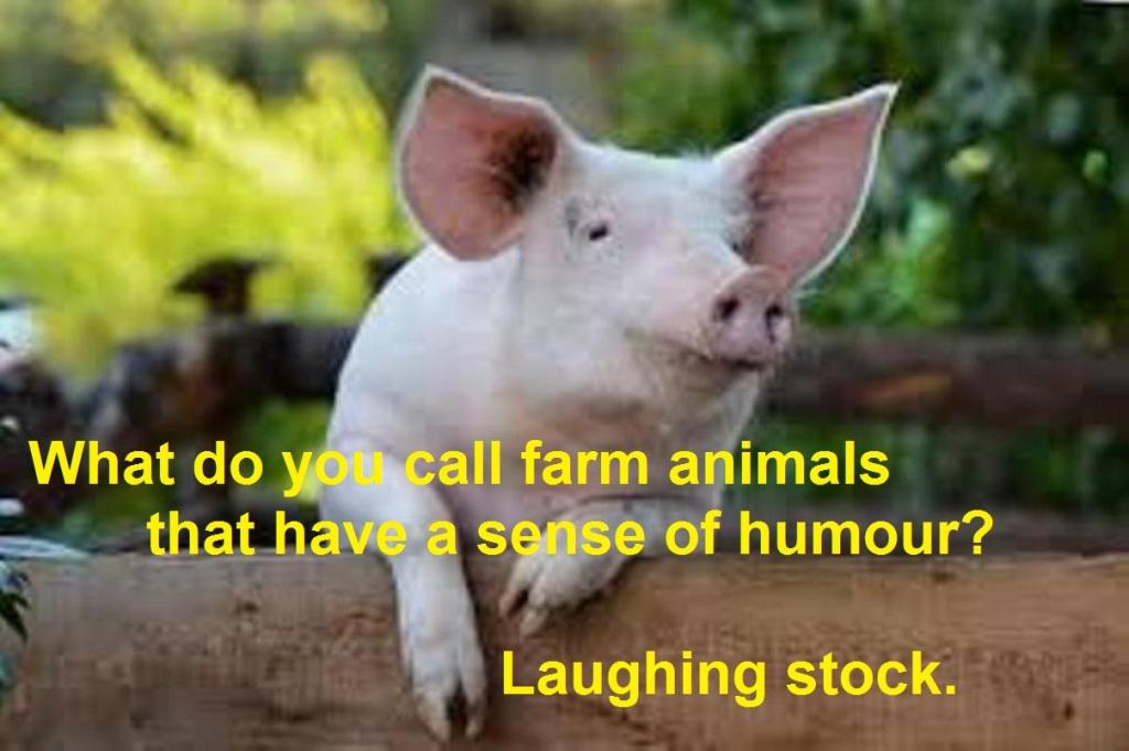Joke about funny farm animals.