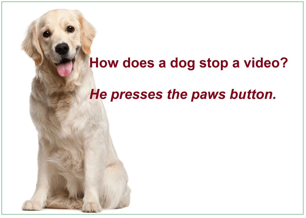 Funny Joke has image of a large white dog sitting and looking at viewer.  Caption says:  How does a dog stop a video?  Answer:  He presses the paws (as in dog paw) button.