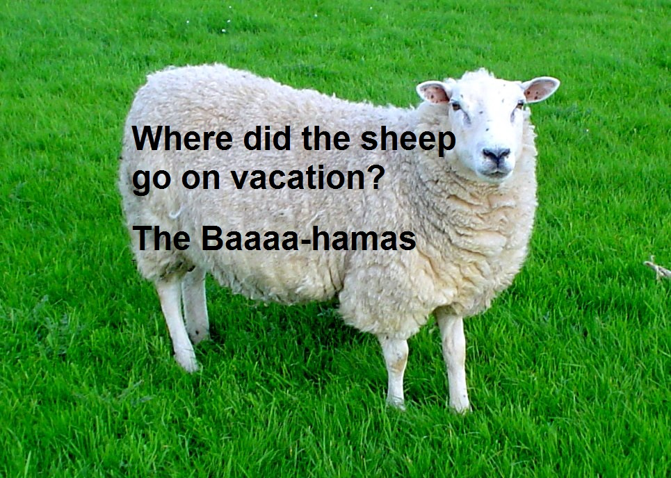 Close image of a Large sheep standing in long green grass, with a joke captioned over it.