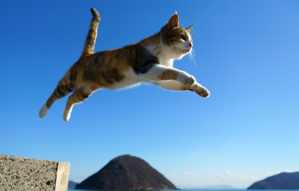 Cat leaping from high position.