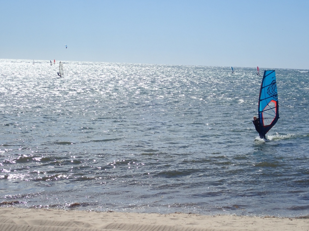 Picturesque scene of many Sailboards sailing on ocean near shore.  Blue sky and water.