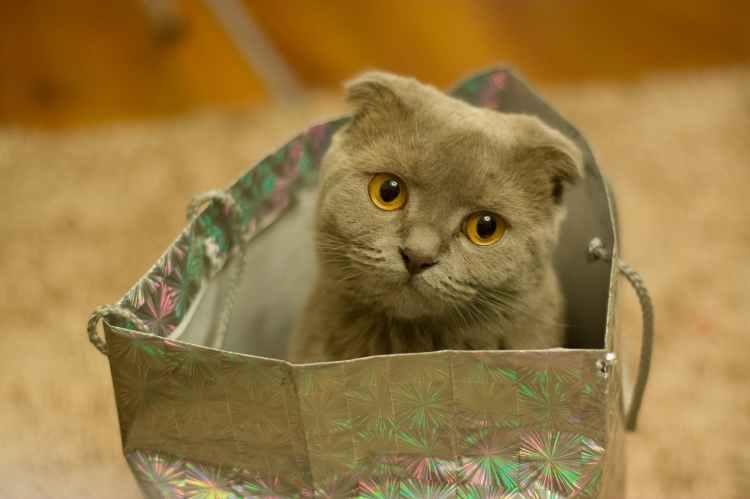 Cute cat sitting in a shopping bag.
