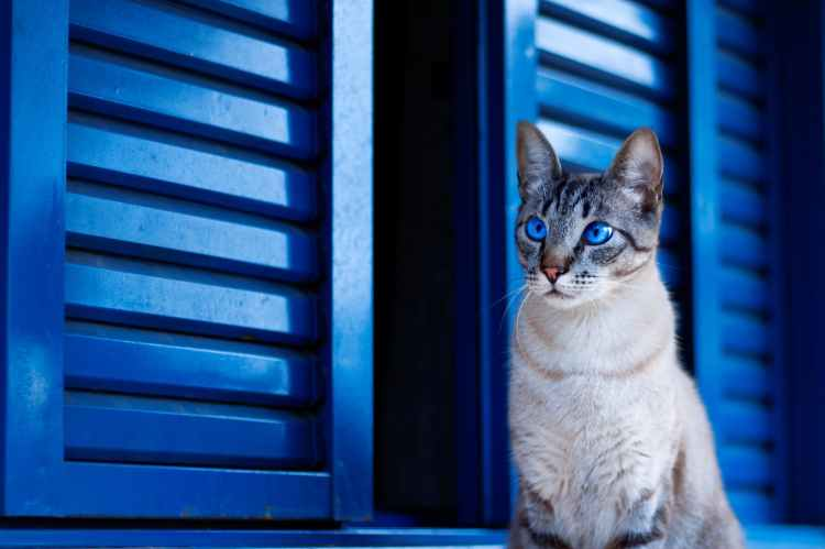 Cute cat sitting in front of bright blue doors.