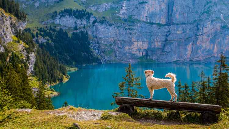 Beautiful relaxing image, of a small dog looking at it's surroundings of mountains and valley views, for a quote by Robert Louis Stevenson.