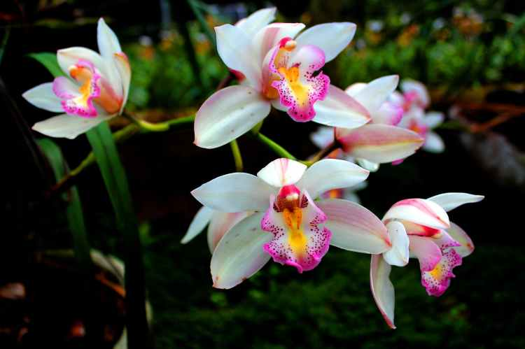 Beautiful Orchid flowers.
