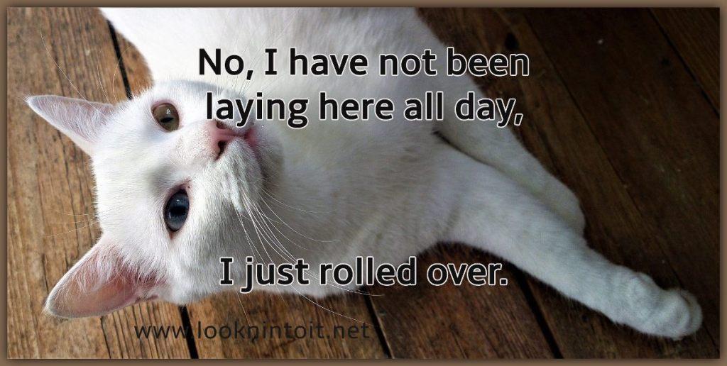 Meme cat laying around all day.