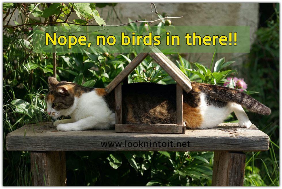 Meme cats in letter box