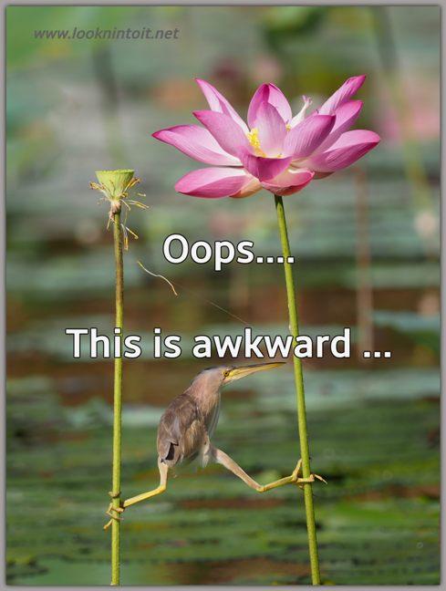 Meme bird awkward