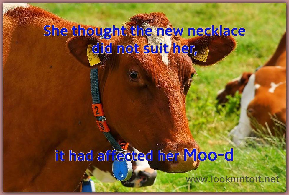 Meme about a Cow