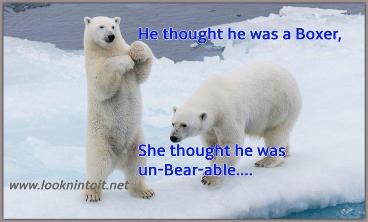 Meme about Polar Bears